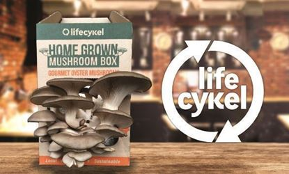 Picture of Life Cykel Coffee Mushroom Box