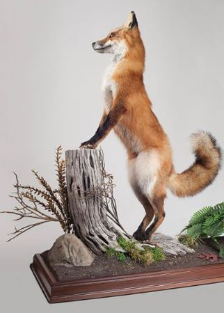 Picture for category Taxidermy