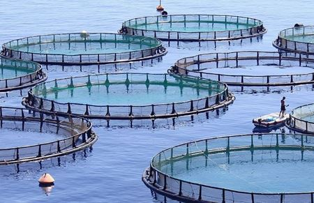 Picture for category Aquaculture